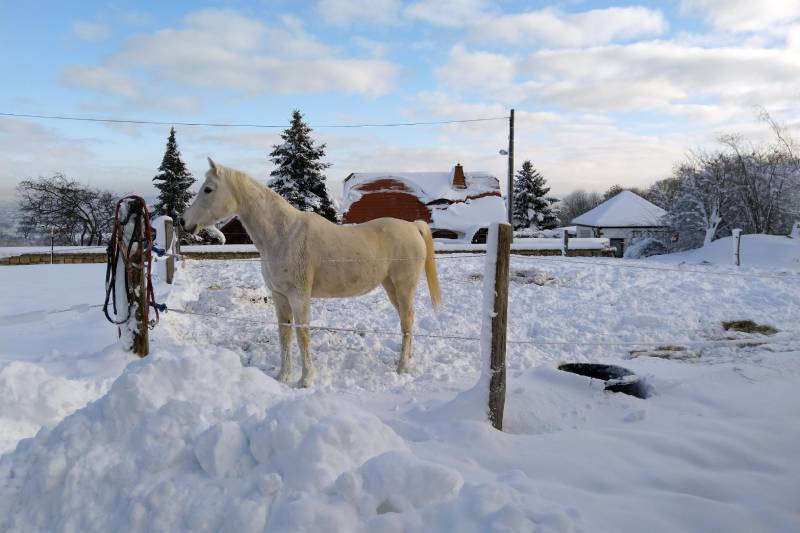 Winterpaddocks mit befestigten Boden in Stallnähe.